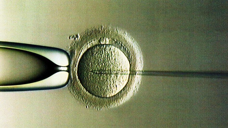 Künstliche Befruchtung im Labor der Universitäts-Frauenklinik Heidelberg