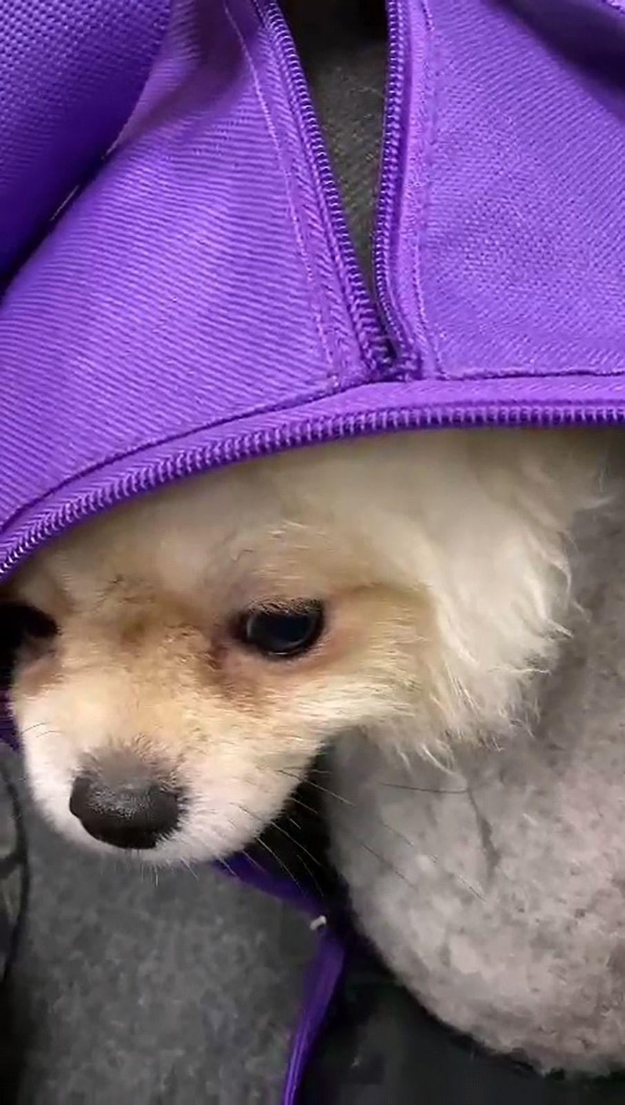 Überraschung am Flughafen: Kleine Hunde in einer Sporttasche