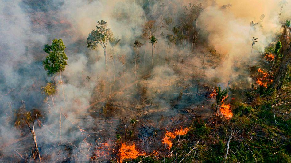 Illegales Feuer im Regenwald des brasilianischen Bundesstaats Pará