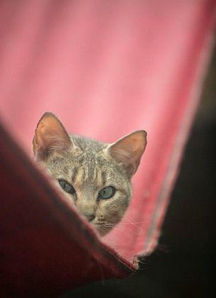"""Hauskatze: Bedroht durch die """"Katzenmafia""""?"""