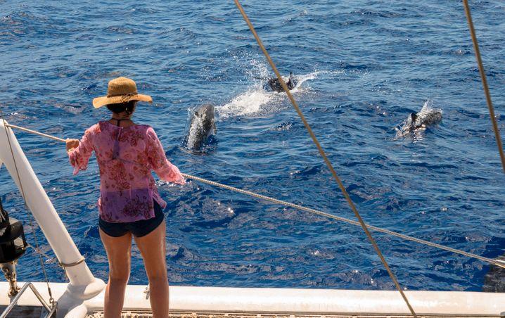 Teilnehmerin einer Delfin-Tour vor der Pandemie. In Zukunft sollen die Besucher länger bleiben und mehr Geld ausgeben als in der Vergangenheit