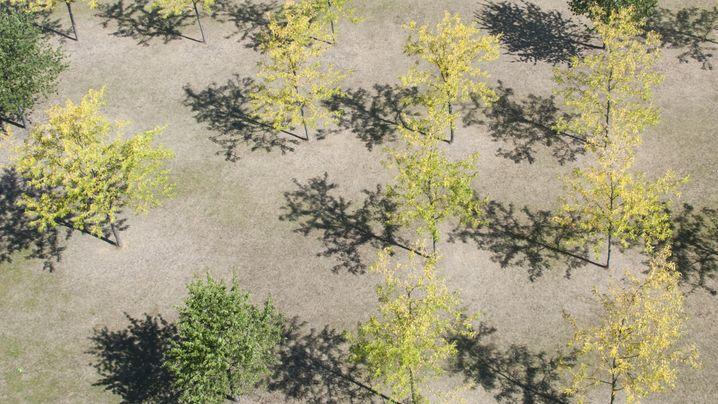 Dürre: Wenn Bäume schwitzen