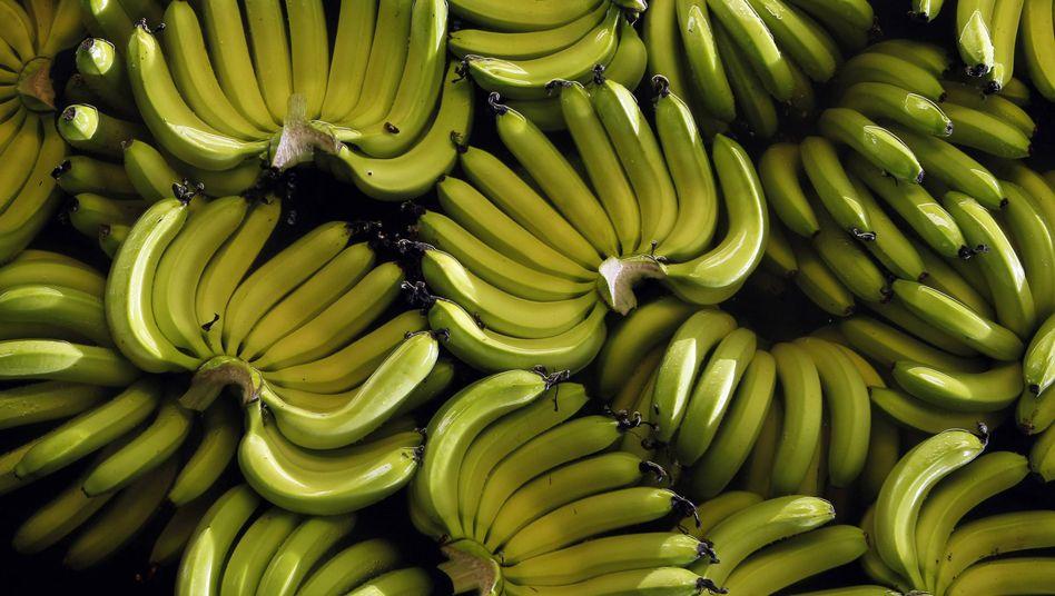 Ecuadorianische Bananen (Archivbild)
