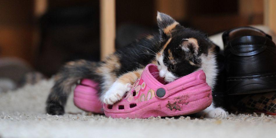 Junges Haustier: Kein erhöhtes Allergierisiko für Kleinkinder