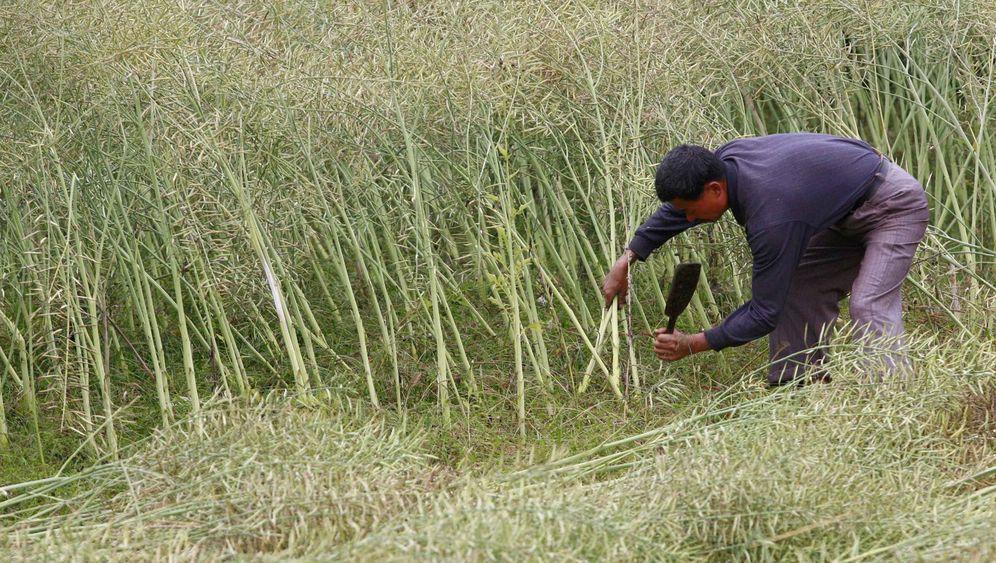 Öko-Boom in China: Geschäft ohne Seele