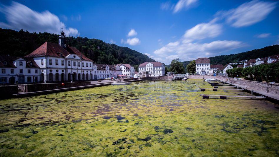 Algen sind auf der Wasseroberfläche im Hafenbecken zu sehen