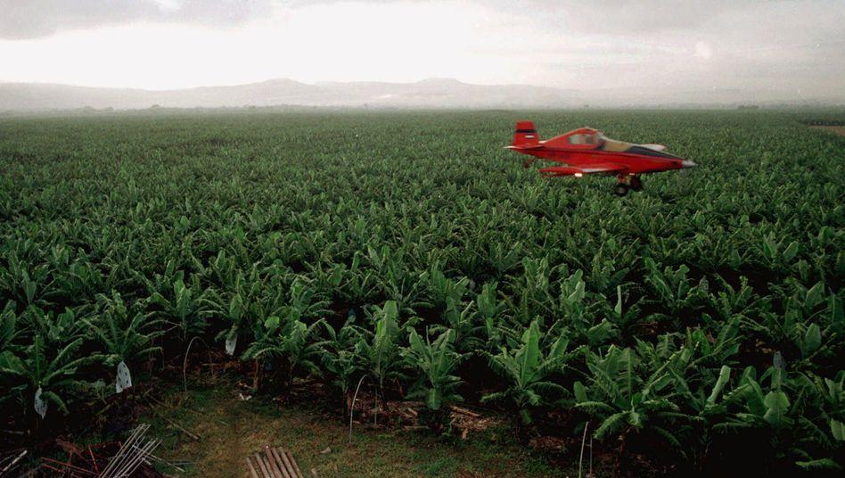 """Flugzeug versprüht Pflanzenschutzmittel über Bananenplantage in Honduras: """"Wenn TR4 nach Lateinamerika kommt, wird es eine Katastrophe"""""""