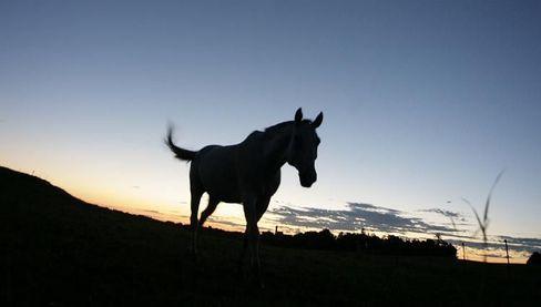 Das Pferd: Seit mehr als 5000 Jahren Partner des Menschen