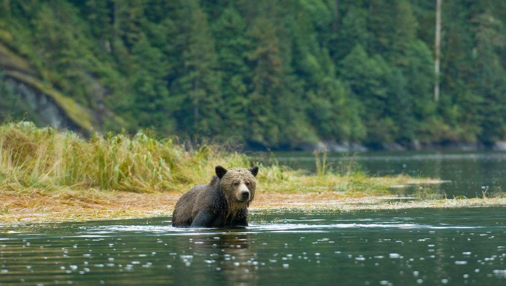 Great-Bear-Regenwald: Jahrelanger Kampf
