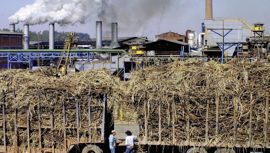 Ethanolproduktion in Brasilien: Bedrohung des Regenwalds?