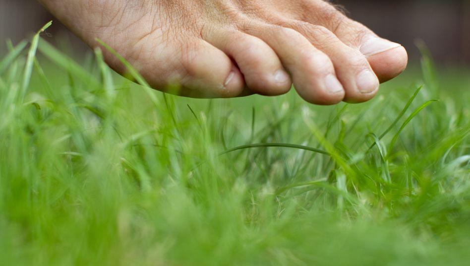 Barfuß auf der Wiese: Beim Laufen ohne Schuhe werden die Gelenke weniger belastet
