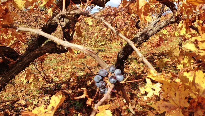 Ausgegraben: Wiege des Weines