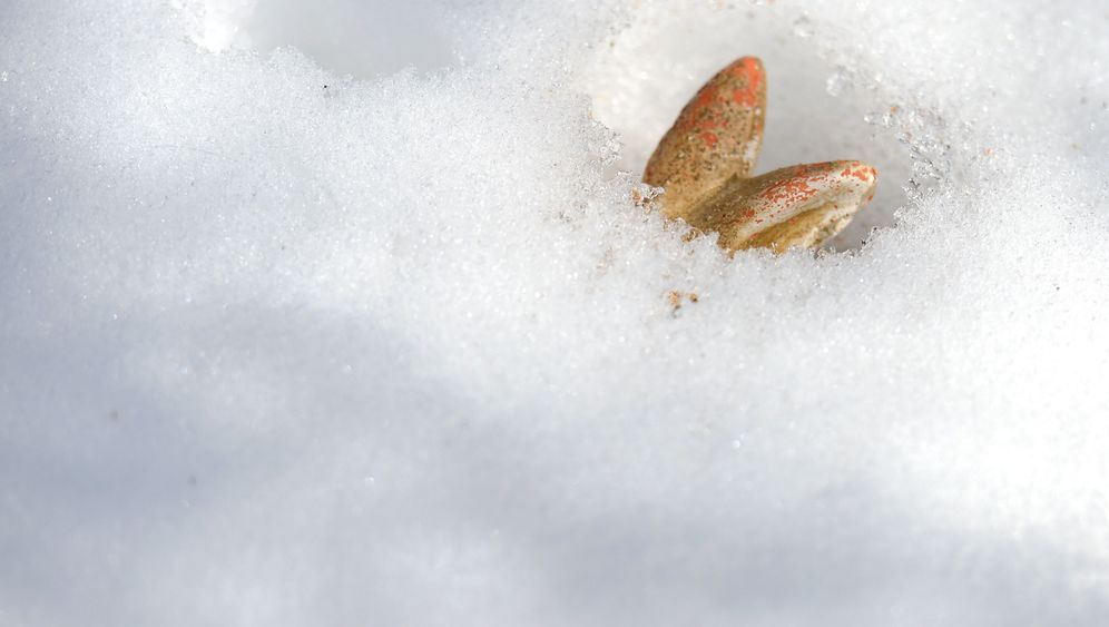 Photo Gallery: Dreaming of a White Easter