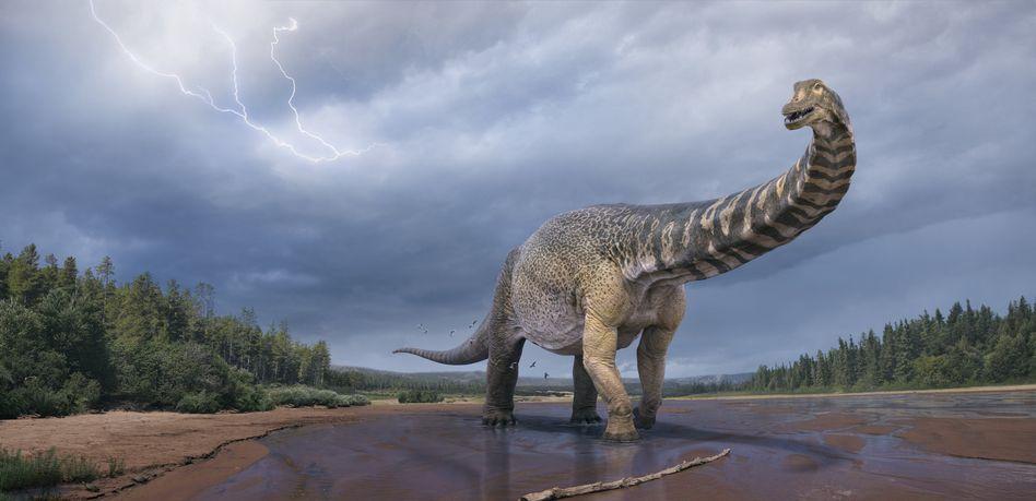 So in etwa könnte Australotitan cooperensis ausgesehen haben