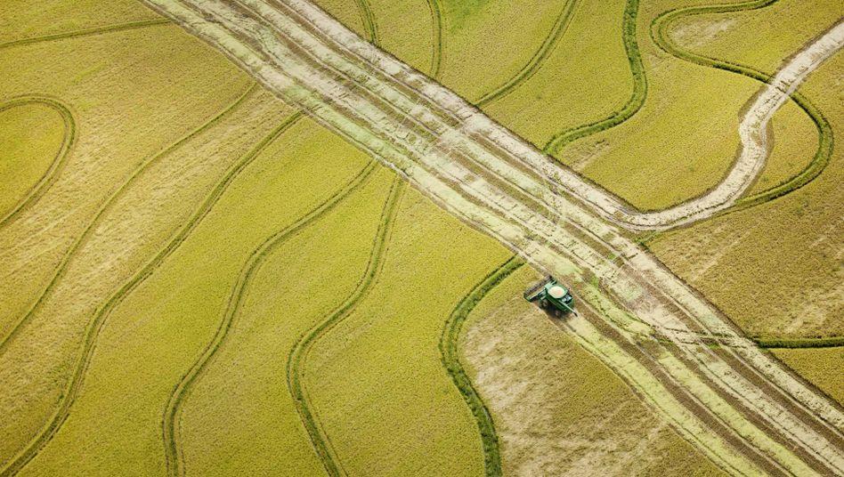 Reisfelder in Arkansas, USA: Welcher Anteil der Nahrungspflanzen landet überhaupt auf dem Teller?