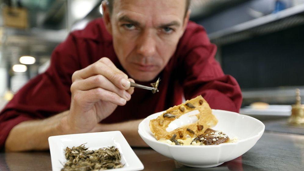 Insektenmenü im Sternerestaurant: Krabbelviech in Gelee