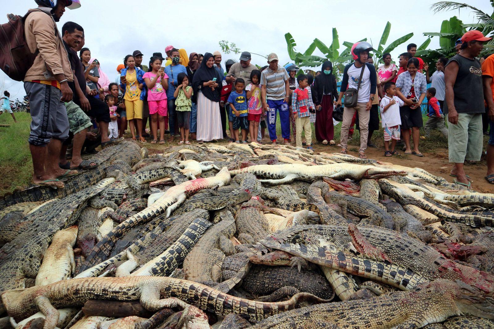 Indonesien/ Krokodile
