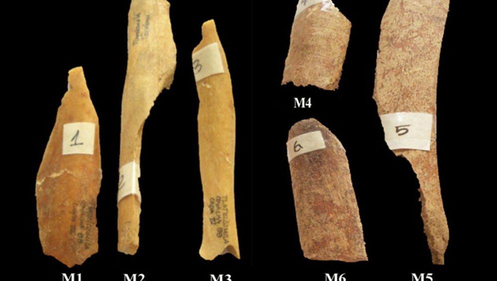 Knochenanalyse: Archäologen blicken in Kannibalenküche