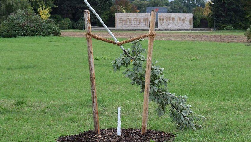 Dieses Foto der abgesägten Eiche veröffentlichte die Stadt Zwickau: Mit dem Baum und der Gedenktafel davor sollte an Enver Simsek erinnert werden