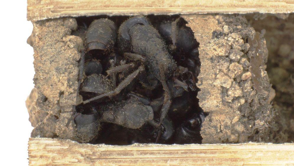 Insekten: Die chinesische Ameisenmauer
