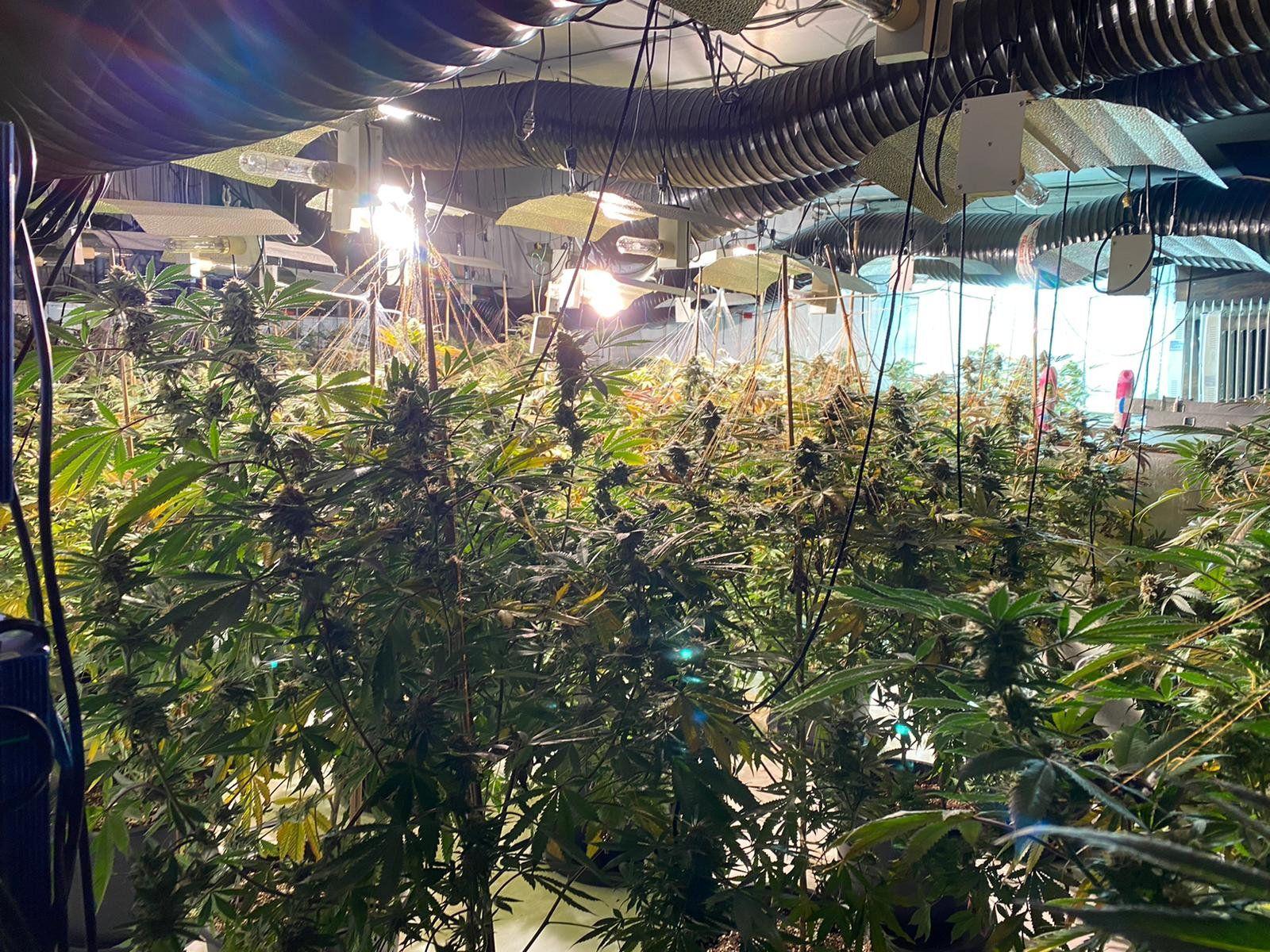 Cannabis-Farm in England