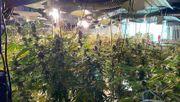 Polizei entdeckt große Cannabis-Farm in Ex-Nachtklub