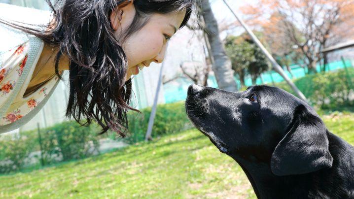 Mensch und Hund: Schau mir in die Augen