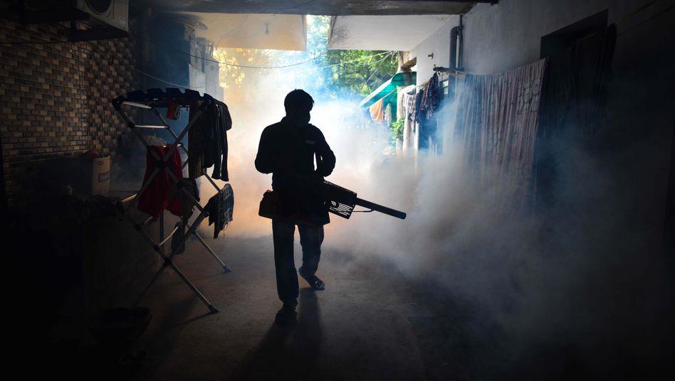 Mückenbekämpfung in Neu-Delhi