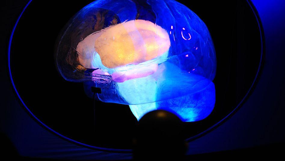 Ausstellung zur Hirnforschung (Archivbild): Was befähigt Menschen zur Echoortung?