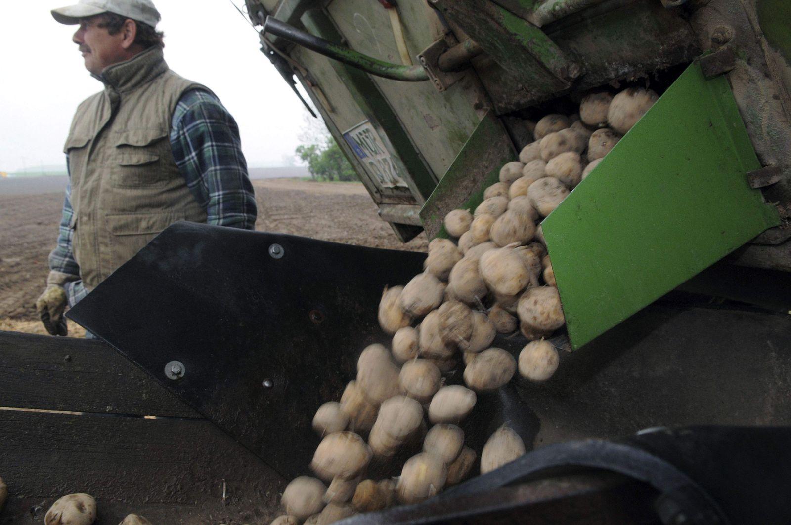 Europa Gentechnik Kartoffel Amflora