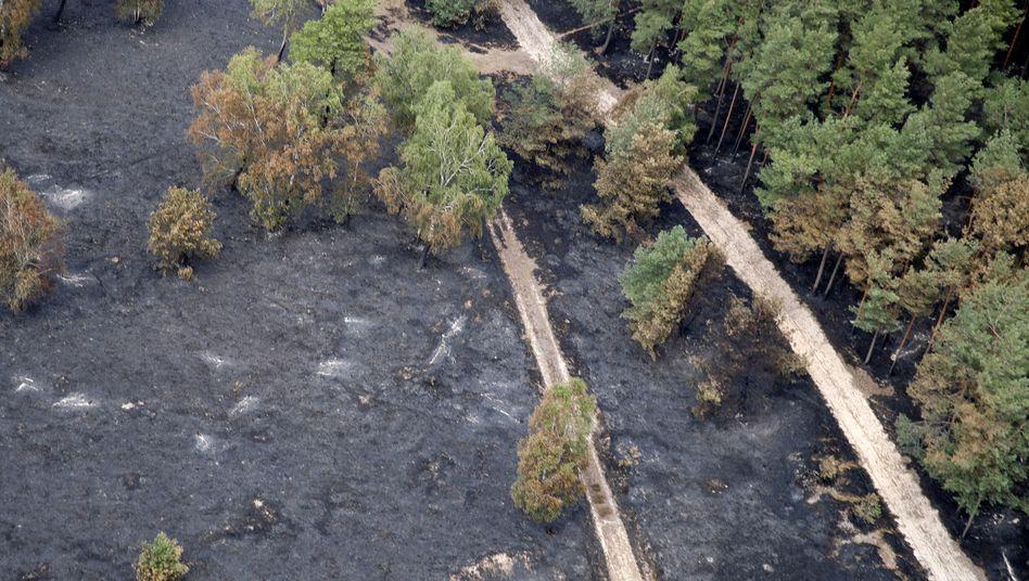 Verbrannter Wald bei Alt Jabel