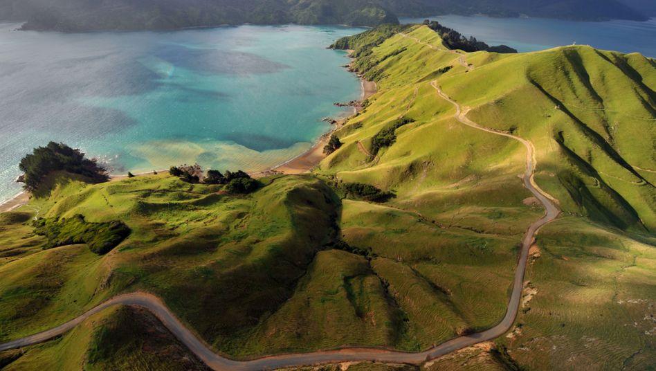 Neuseelands Natur Ist Bedroht Der Spiegel