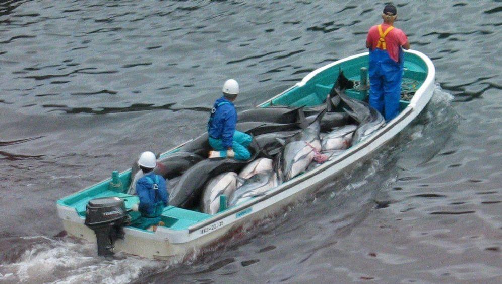 Delfinjagd: Jährliches Schlachten