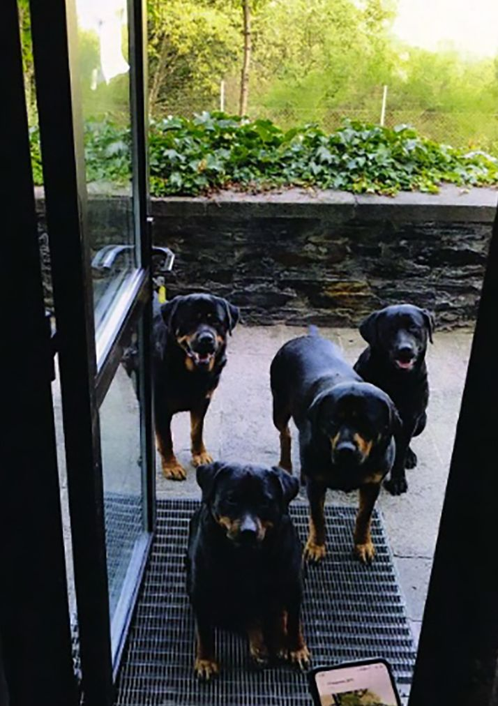 These Rottweilers guarded the premises and barked like crazy if anyone got too close. Frightened locals even complained to the town authorities about them.