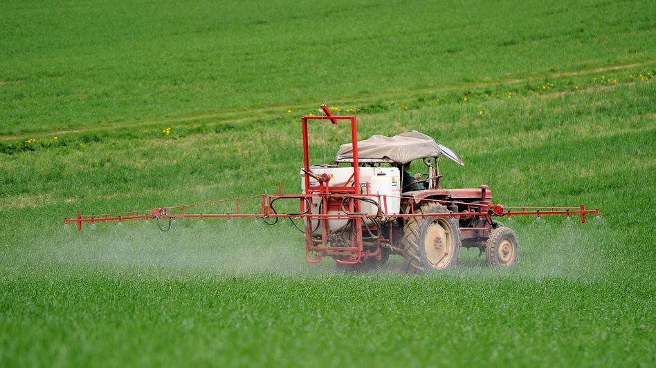 Ein Bauer sprüht Pflanzenschutzmittel gegen Unkraut auf ein Weizenfeld (Archivbild)