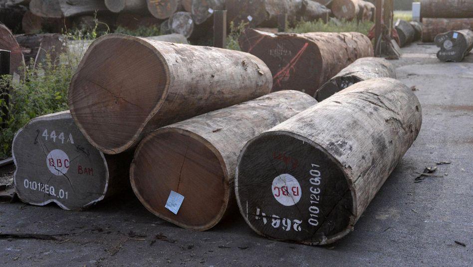 Wenge-Stämme in Gütersloh: Markiert mit den Firmennamen BBC und BAM
