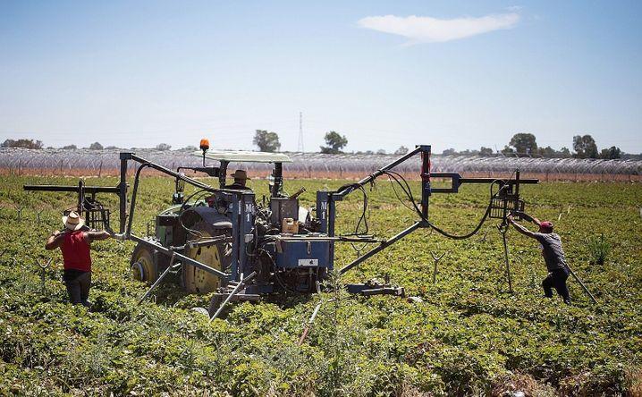 Field workers in the Huelva region