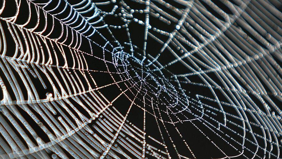 Spinnennetz: Begehrtes Material