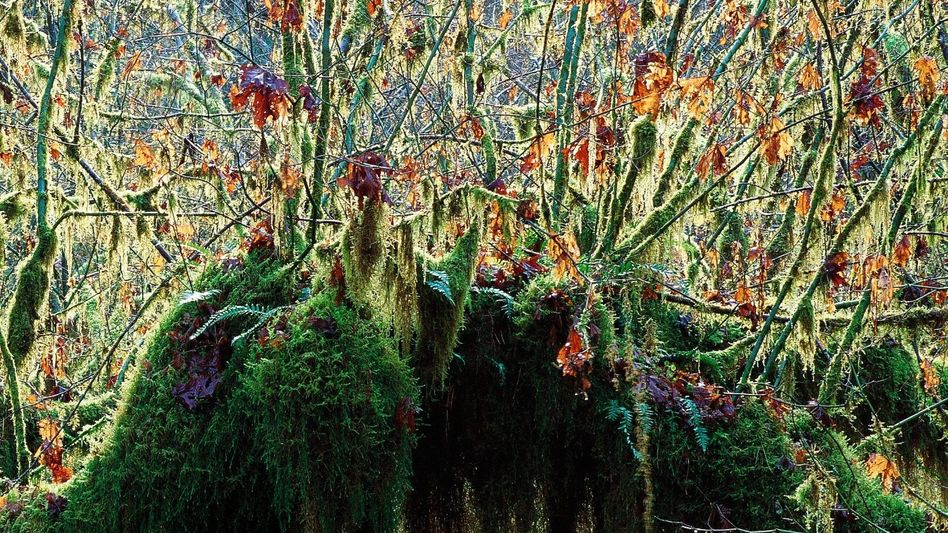 Regenwald im Tongass-Nationalpark in Alaska