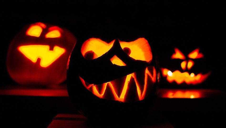 Halloween-Kürbisse: Gehören zum Jahreslauf wie Kastanienmännchen