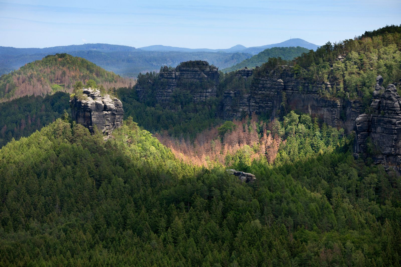 Europa Deutschland Sachsen Elbsandsteingebirge sächsische Schweiz Abgestorbenen Nadelwald in de