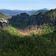 Schäden in deutschen Wäldern massiver als angenommen