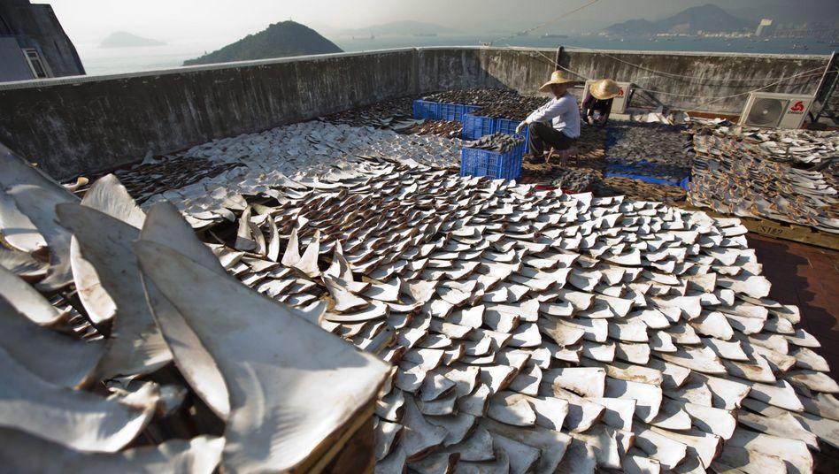 Haifischflossen (in Hongkong): Thai Airways erklärt Ausstieg aus Transport