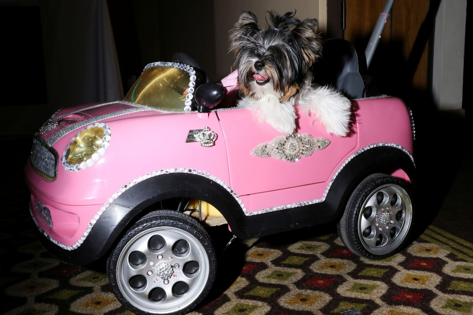 A dog sits in a toy car at the 17th annual New York Pet Fashion Show in the Manhattan borough of New York