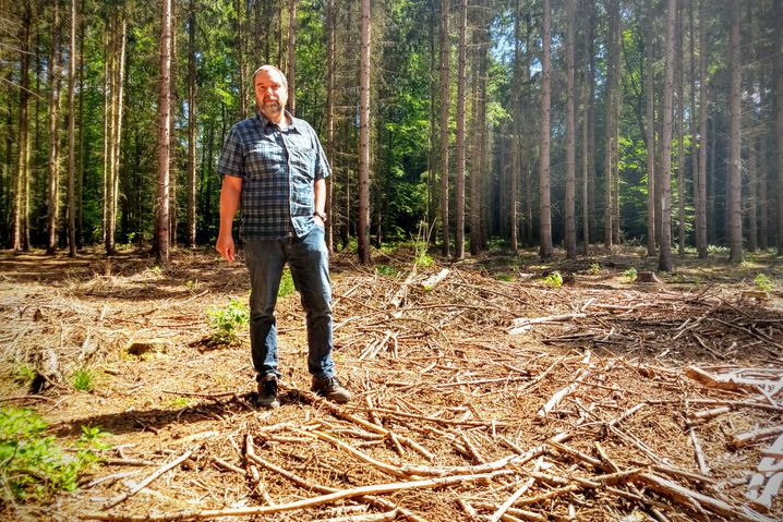 Forstexperte Bolte auf Kahlschlag bei Eberswalde, die Fichten waren vom Borkenkäfer geschädigt worden