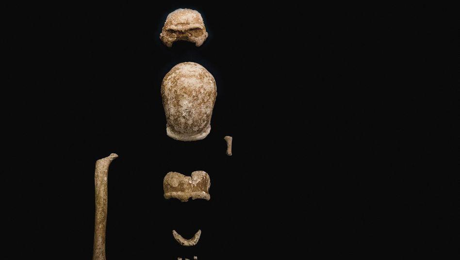 Neanderthaler-Überreste aus der Guattari-Höhle