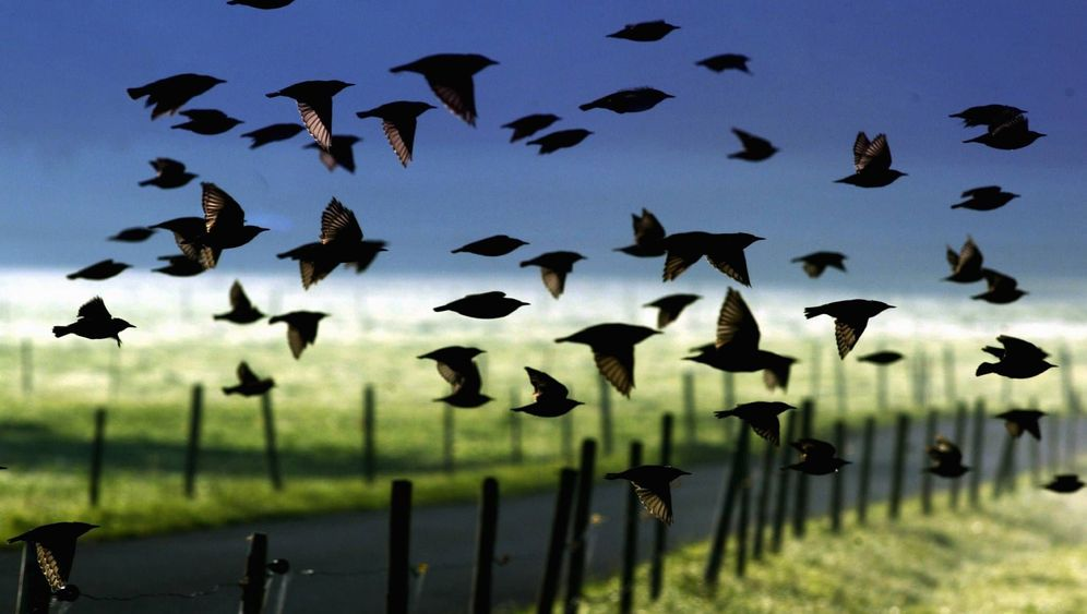 Zugvögel: Langstreckenflieger mit Orientierungssinn