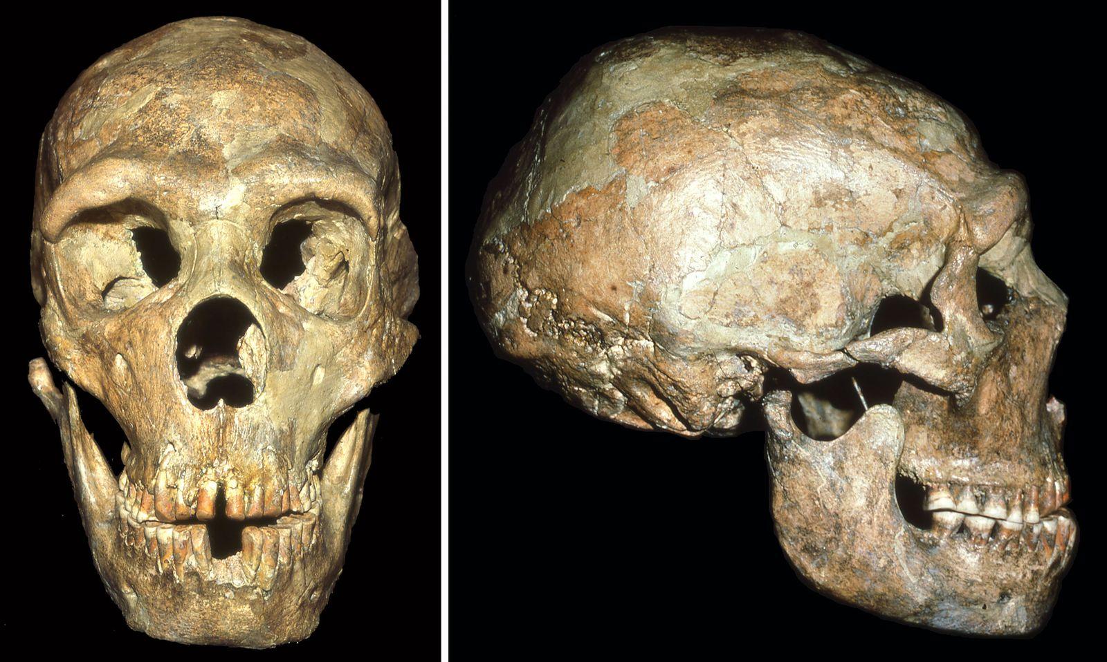 EINMALIGE VERWENDUNG Neandertaler/ Fürsorge