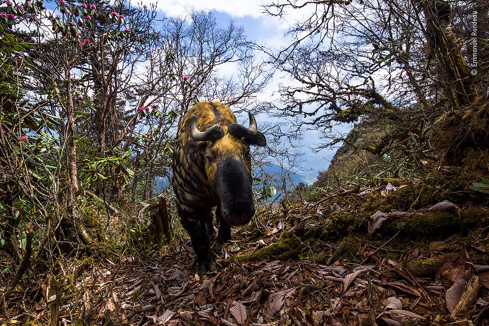 Spirit of Bhutan by Emmanuel Rondeau, France