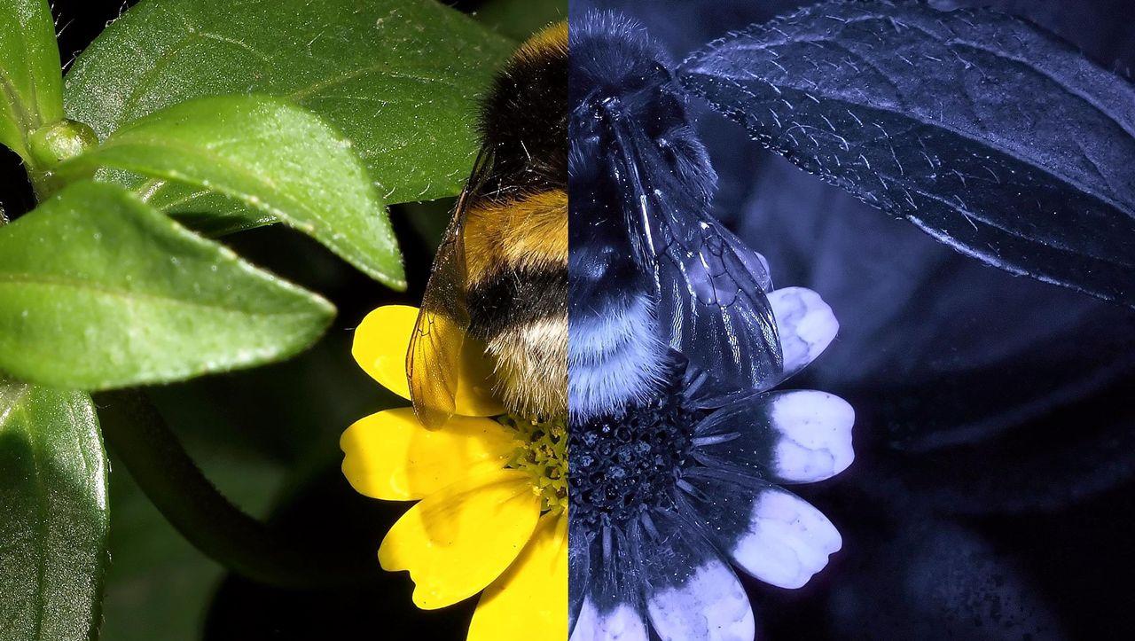 Wie Sehen Insekten